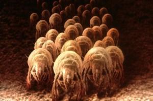 many-dust-mites